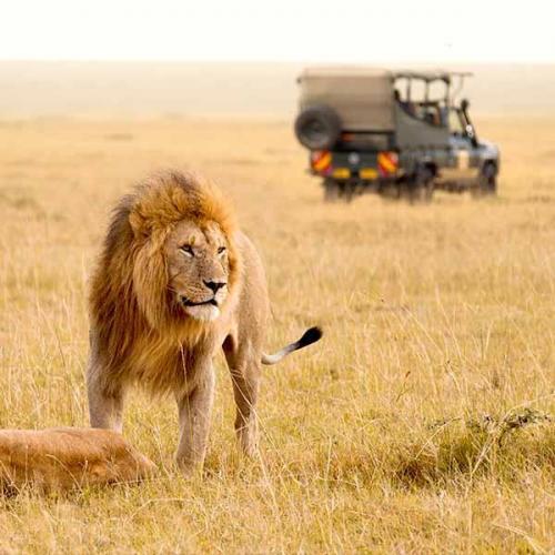 Lucas & Lewellen African Wine Safari