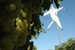 A photo of a windsock in the vineyard