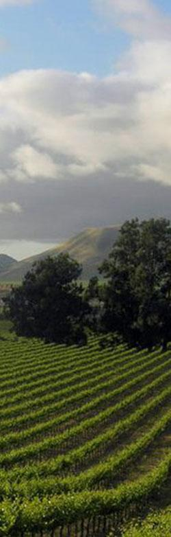 The Goodchild Vineyard scenery