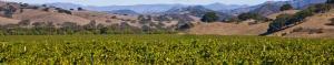 Los Alamos Vineyard