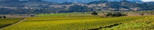 Valley View Vineyard