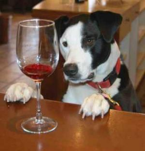 A picture of a dog looking at a wine glass