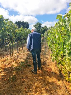 Image of Louis Lucas walking in the vineyard