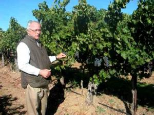 Growing Cabernet Sauvignon - Louis Lucas