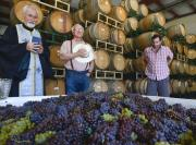 Photo by Len Wood of Father John Finley blessing the first fruits of the Lucas & Lewellen grape harvest
